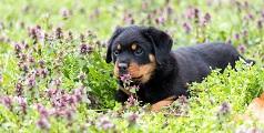 Licencia animales potencialmente peligrosos